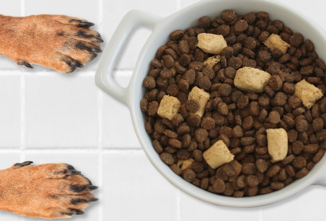 Do You Look at Dog Food Ingredients?