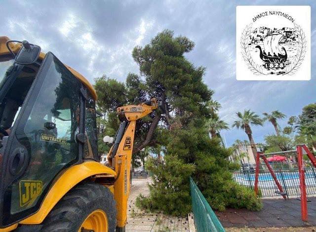 Πτώση δέντρου στο Ναύπλιο