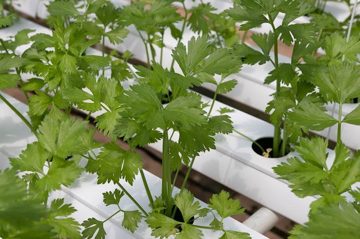 Pertanian Dengan Cara Hidroponik Yang Menguntungkan