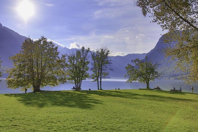 Tree, Grass and Mountain Lake Bohinj Slovenia