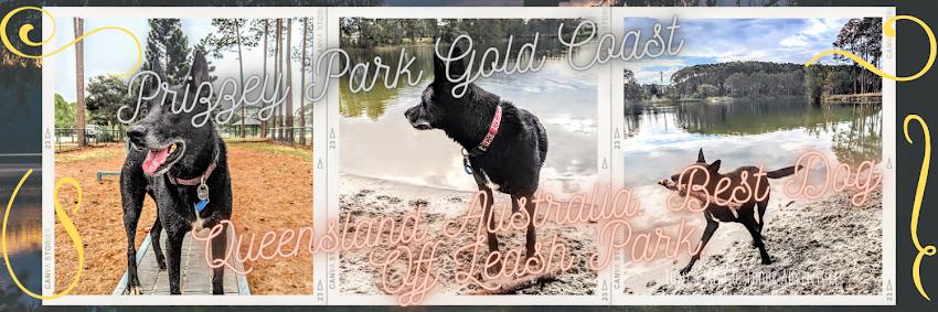 Pizzey Park Gold Coast Dog Park