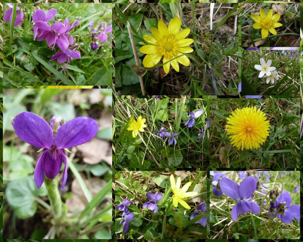 Eulita en normandie les couleurs du printemps - Couleur du printemps ...