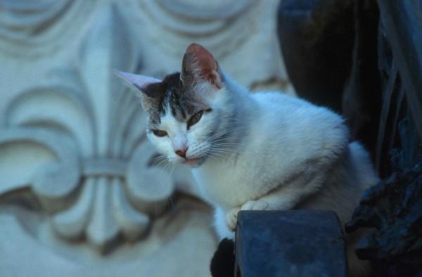 madrid cats