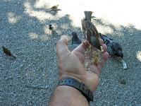 gorrión, pájaro, vuelta al mundo, round the world, La vuelta al mundo de Asun y Ricardo