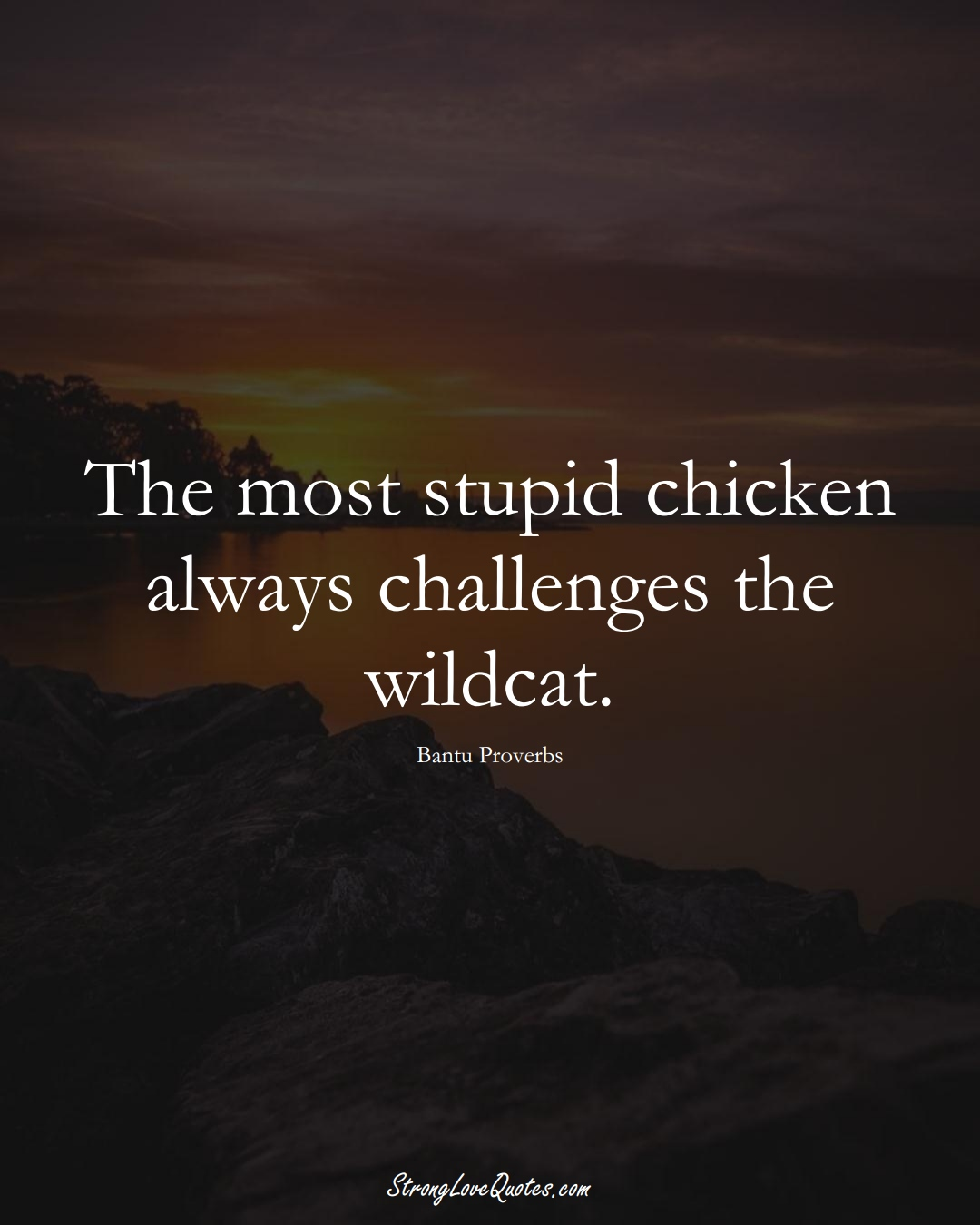 The most stupid chicken always challenges the wildcat. (Bantu Sayings);  #aVarietyofCulturesSayings