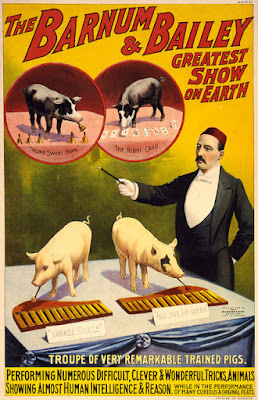 Barnum & Bailey trained pigs