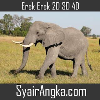 Erek Erek Gajah di Buku Mimpi 2D 3D 4D Lengkap