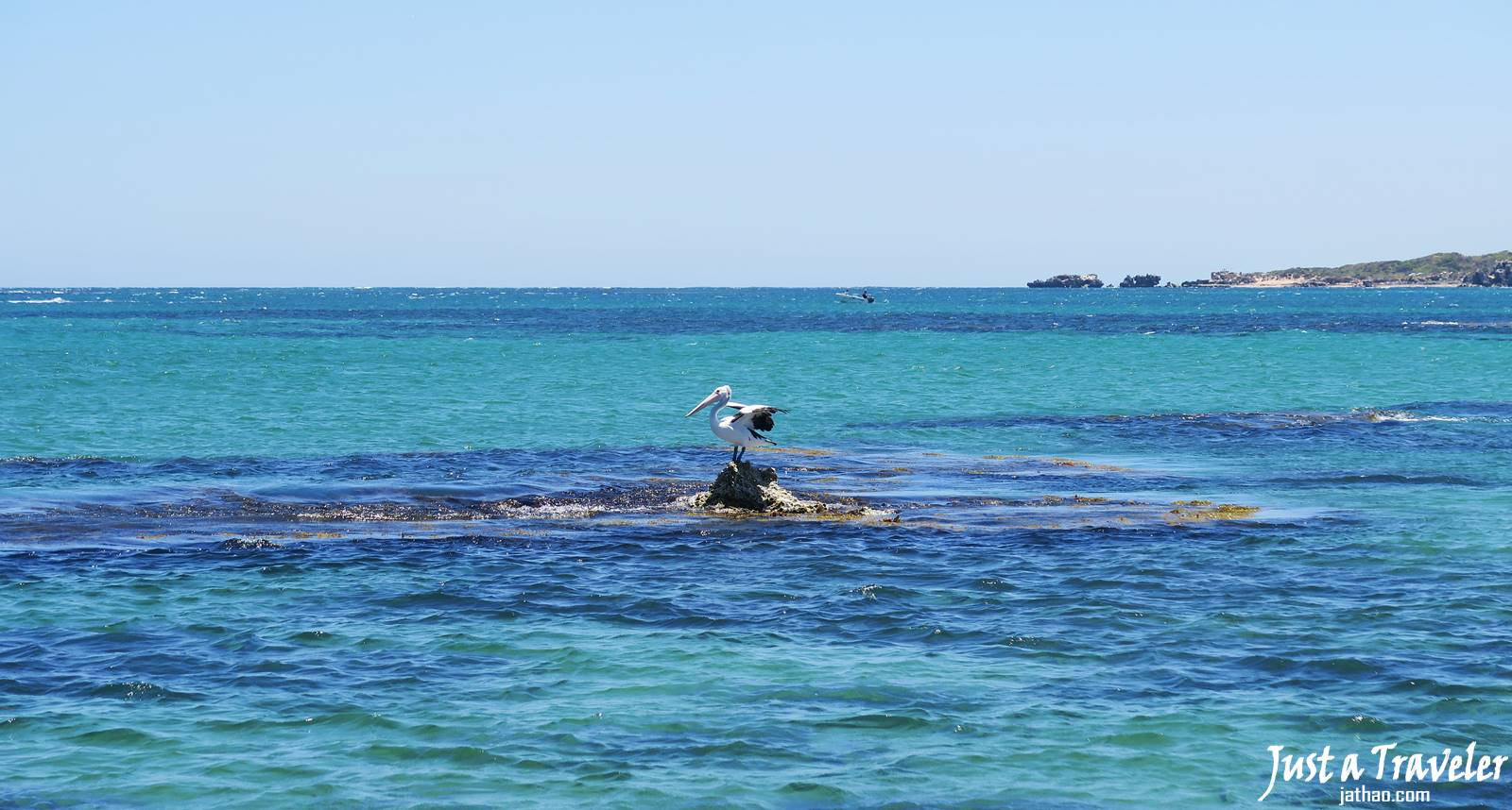 伯斯-景點-推薦-必玩-一日遊-企鵝島-Penguin-Island-遊記-旅遊-自由行-Perth