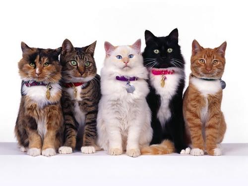Berbagai Jenis Kucing Yang Menarik Untuk Peliharaan