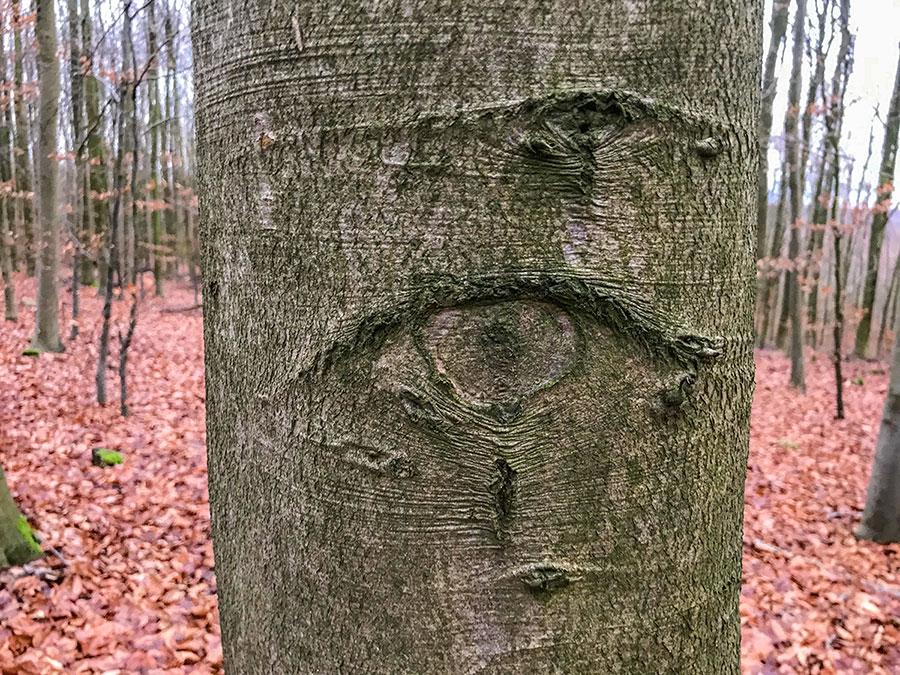 Skogen ser dig.