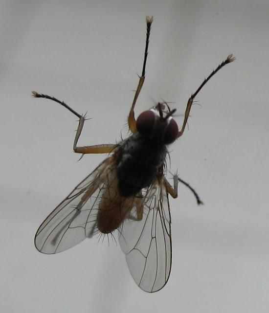 قصة الطيران على جناح ذبابة
