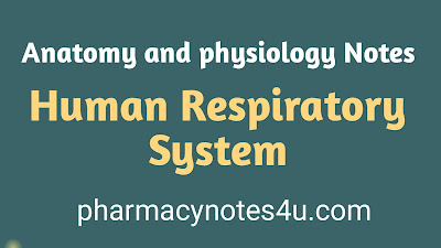Human Respiratory System, Respiration, expiration