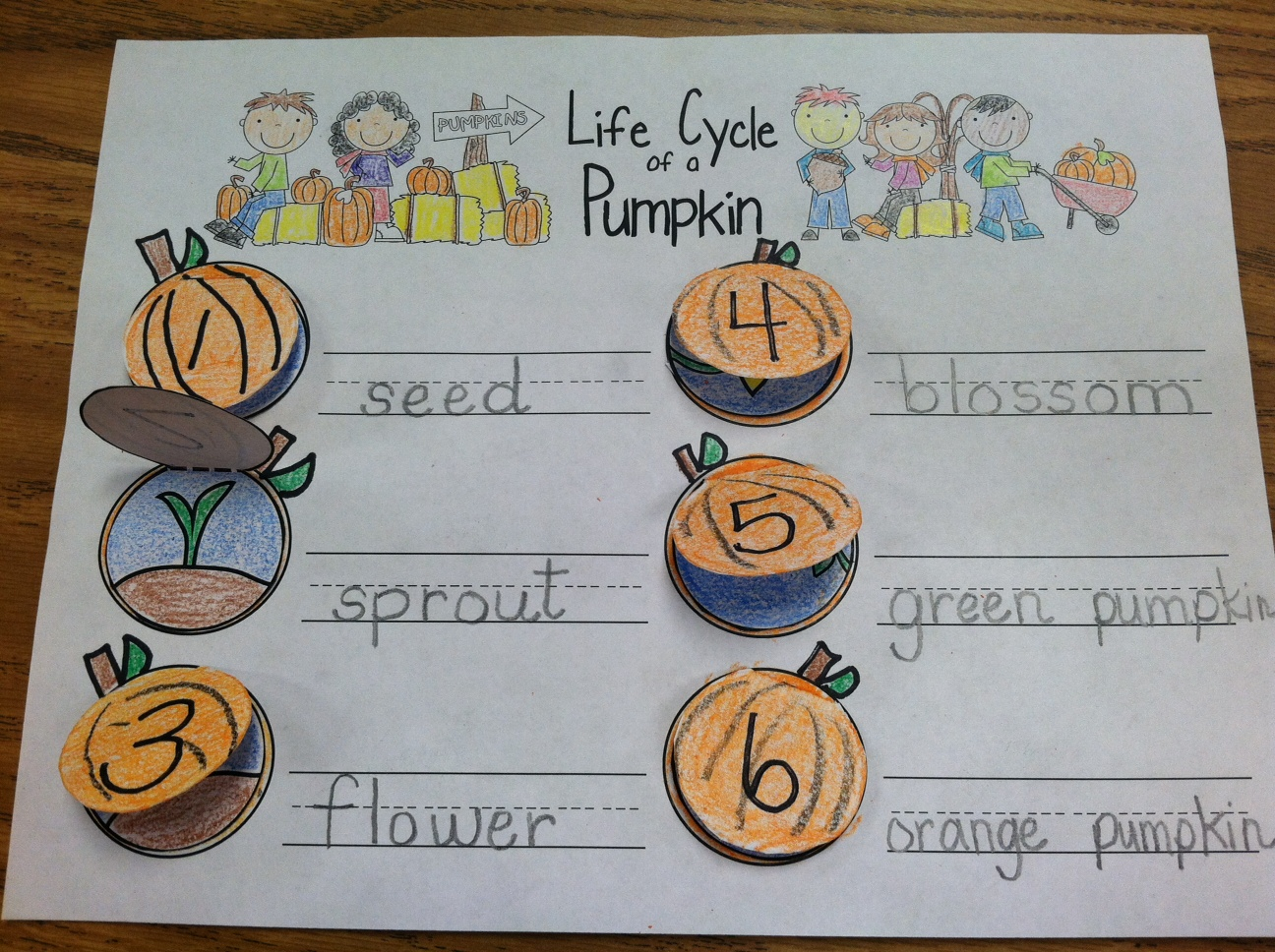 Fall Into First Pumpkin Life Cycle