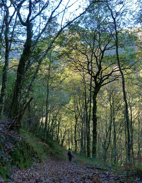 Bosque del Silencio - Asturias