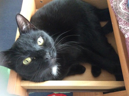 black cat laying inside a wooden drawer