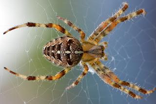 Spider information in hindi