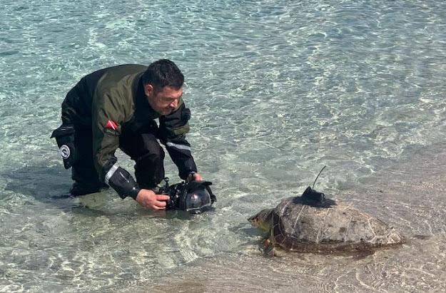 PORTO CESAREO (Lecce): tartaruga Giuseppina ritorna in mare
