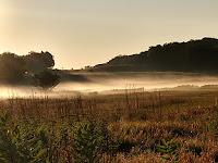 Fog settling over a field