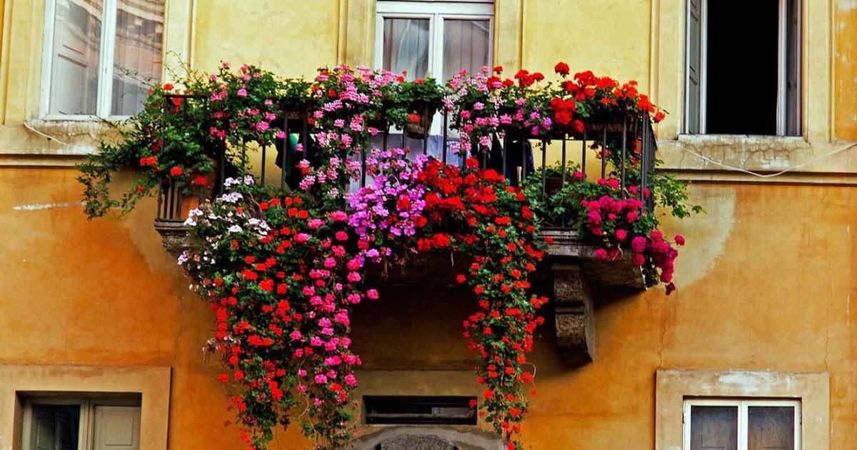 Prima Edizione Del Concorso Balconi Fioriti 2018 I Love Chieri