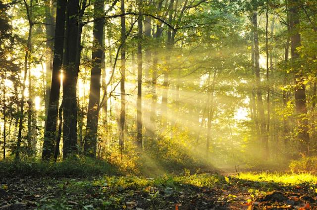 13 Cara Hidup Ramah Lingkungan Bisa Membuat Anda Lebih Sehat