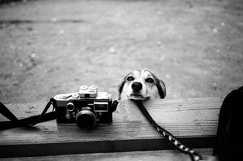 Frases Com Animais De Estimação Para Facebook: Salve Pet: Imagens Para Tumblr