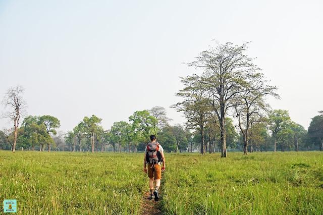 Seguro de viaje para Nepal (Parque Nacional de Bardia)