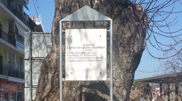Τα δέντρα που «διηγούνται» ματωμένες ιστορίες της Επανάστασης του 1821