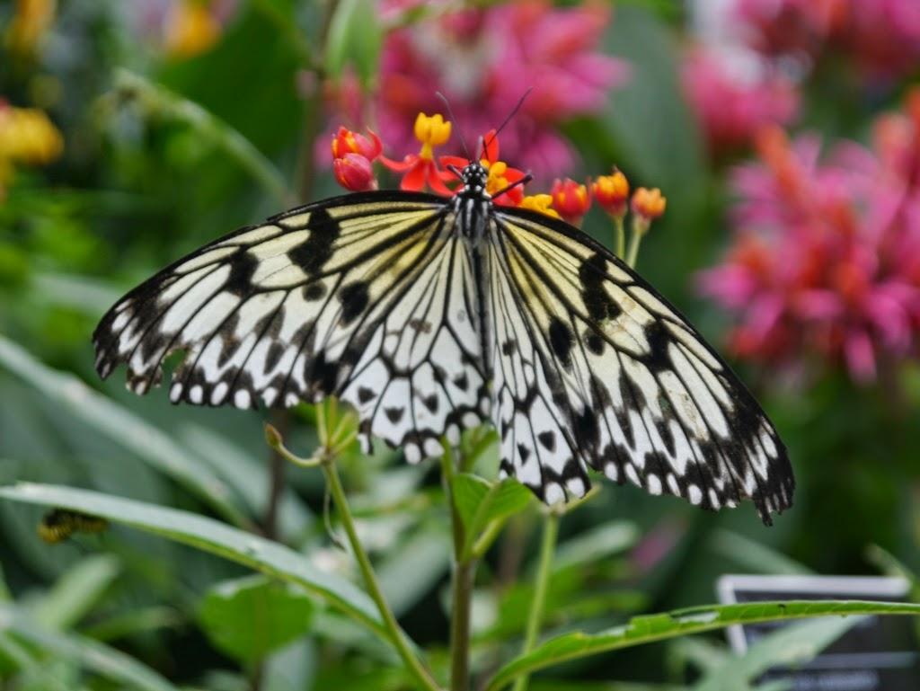 milien et les chipmunks exposition des papillons au