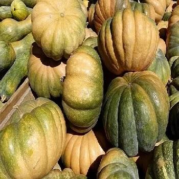 दूधी भोपळा, bottle gourd vegetables name in Marathi