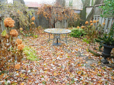 Coxwell Danforth Back Garden Fall Cleanup Before by Paul Jung Gardening Services--a Toronto Gardening Company