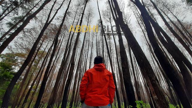 Sensasi Spring Autumn di Hutan Pinus Tala-Tala