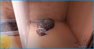 Tanda Kucing Stres dan Penyebabnya