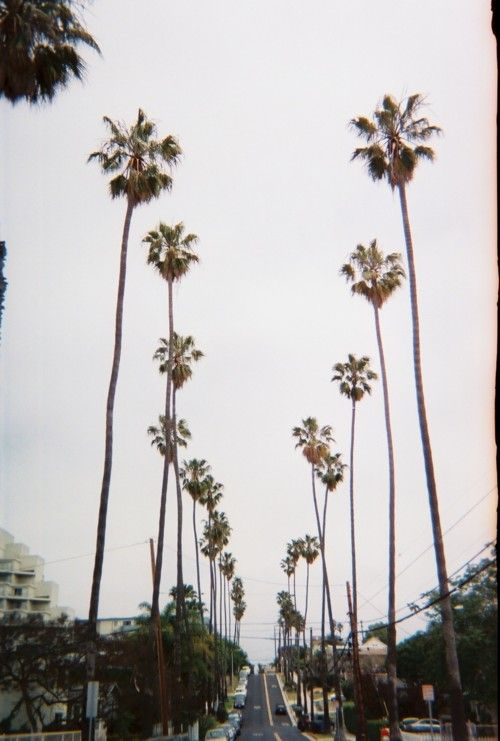 {at this moment | things : the importance of palm trees}