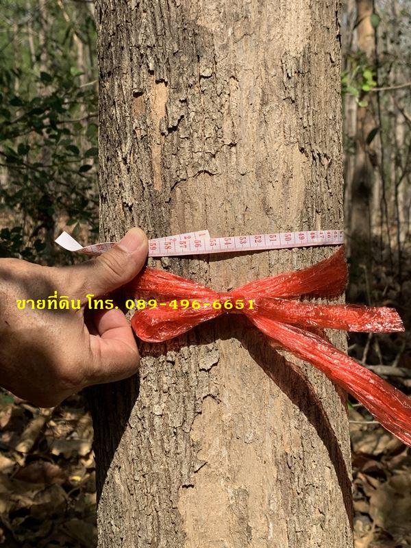 ขายที่ดินและต้นสัก 4 ไร่ 88 ตร.ว. อ.วิเชียรบุรี จ.เพชรบูรณ์