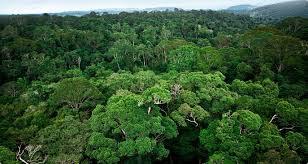 Floresta de Carajás