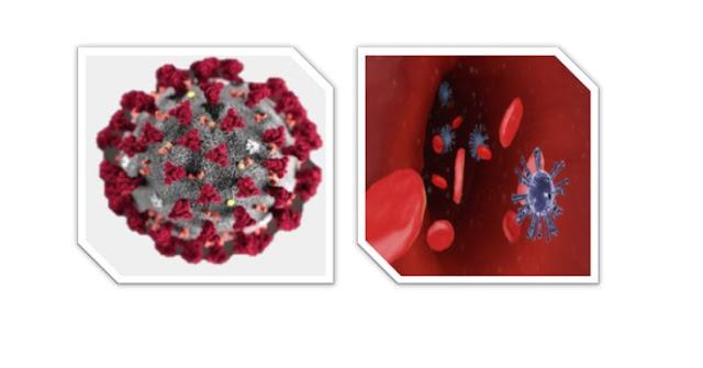 فصيلة الدم وفيروس كورونا المستجد
