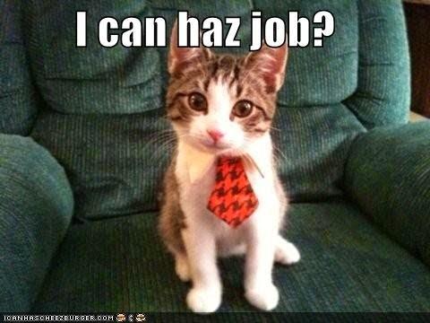 community-manager-gato-corbata