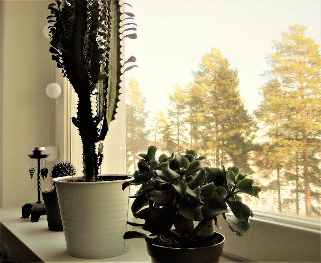 kukka, tyräkki, kaktus, maisema