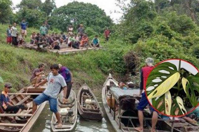Nasib Penggembala Kerbau yang Nekat Cari Janda Bolong di Hutan, Istri Nangis Histeris saat Pulang
