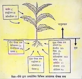 पौधों के जीवन में जल का क्या महत्व है एवं पौधों में जल का परिवहन कैसे होता है, पौधों को जल क्यों आवश्यक है समझाइए, पौधों में जल के कार्य, पौधों में जल की उपलब्धता