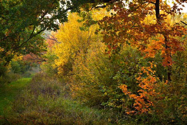 Cambridgeshire woodland turns a bright autumn colour