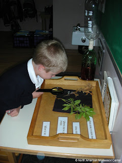child looks at parts of a plant why choose NAMC montessori autonomy