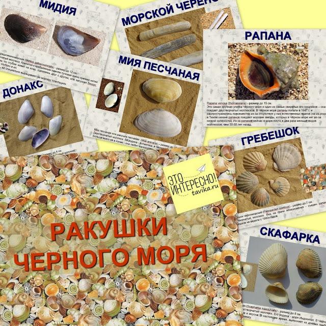 презентация о ракушках черного моря