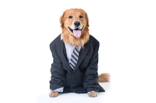 Dog lawyer would be better than human lawyer