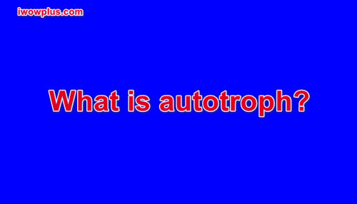 What is autotroph?