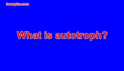 What is autotroph?