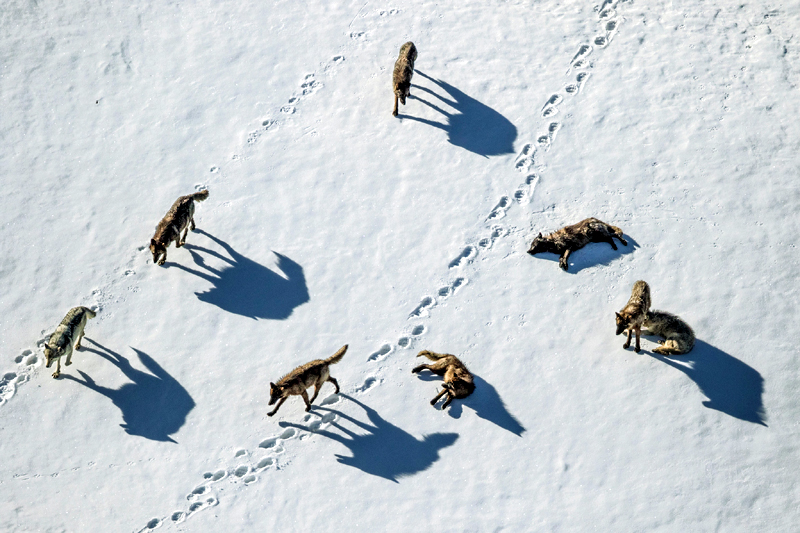 Many wild animals 'count'—and it helps them survive to another day