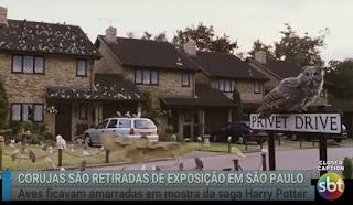Vídeo: Reportagem do SBT Brasil sobre as corujas resgatadas da exposição 'Casa dos Bruxos' | Ordem da Fênix Brasileira