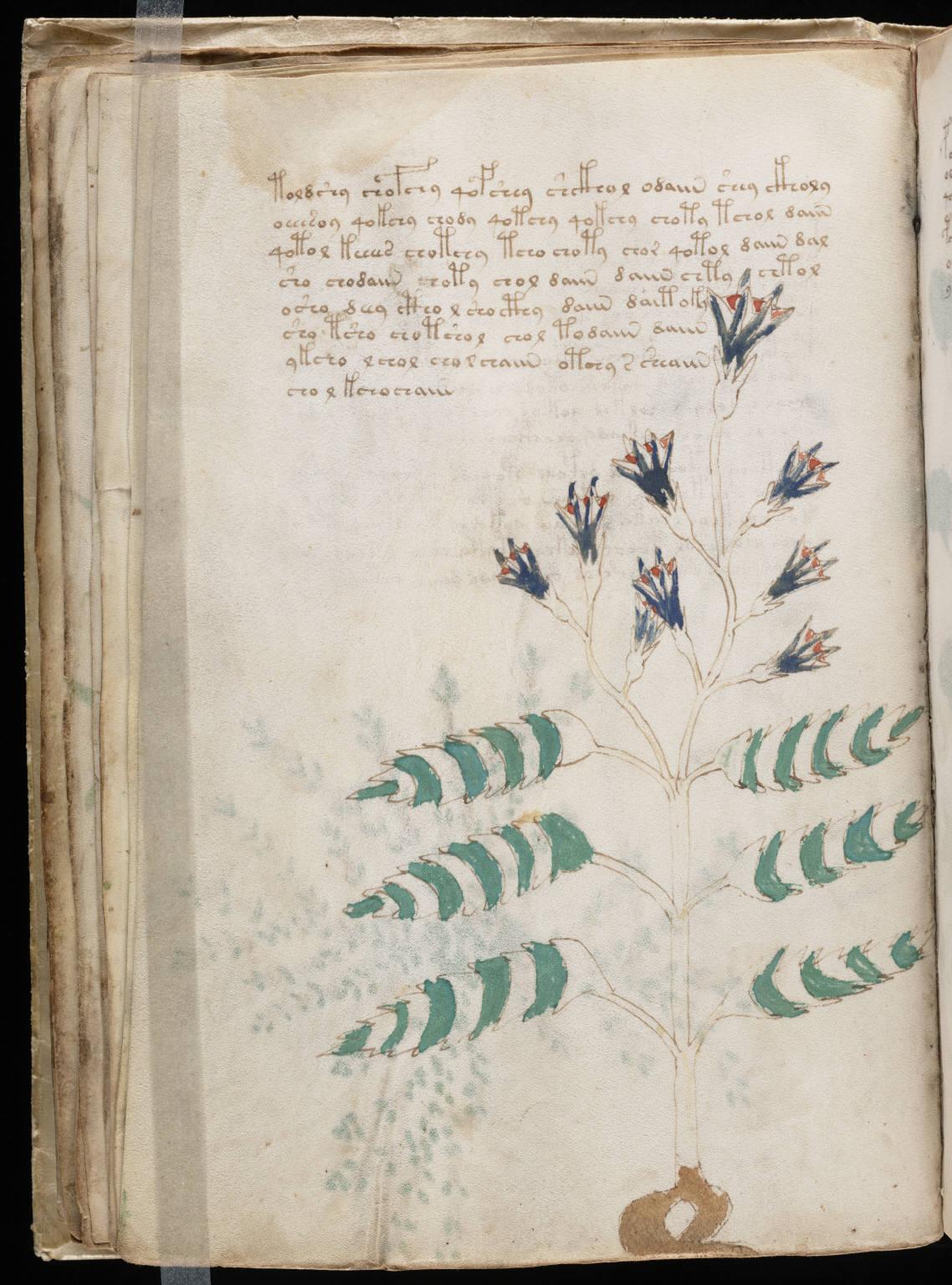 manuscrito042