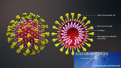 corona virus in dog, corona virus flu